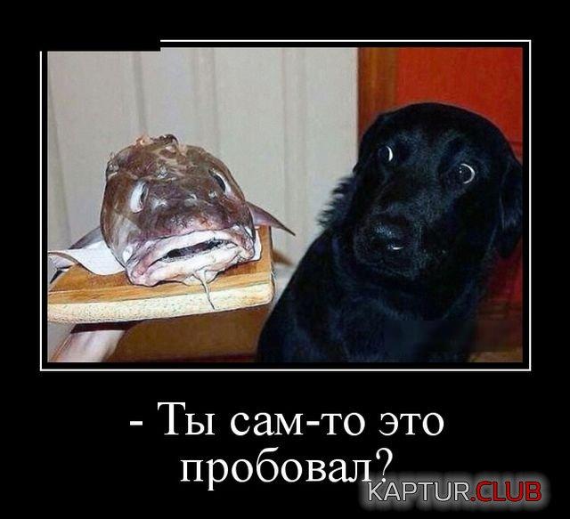 1530087088_demotivatory_10.jpg | Рено Каптур Клуб Россия | Форум KAPTUR.club