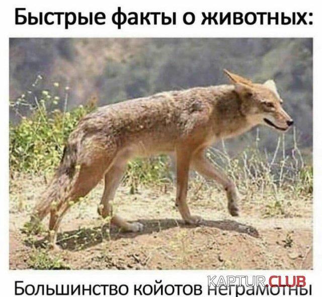 210512_17_trinixy_ru.jpg   Рено Каптур Клуб Россия   Форум KAPTUR.club